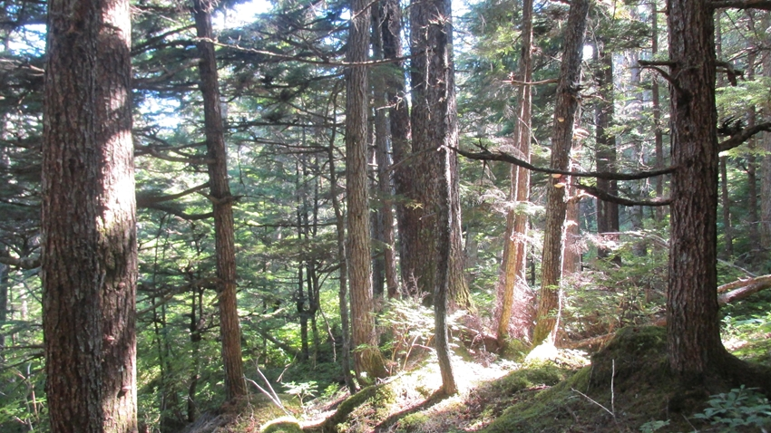 Chilkat Peninsula Forested Parcel
